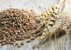 В ходе товарных интервенций цены на зерно продолжили рост