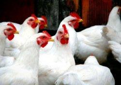 Россия может наложить запрет на поставки мяса из Германии