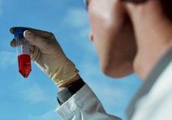 Вирус птичьего гриппа вновь обнаружен в Германии