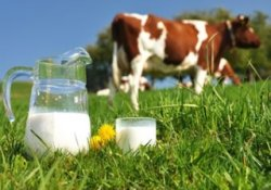 Итоги вступления в ВТО: импорт молока растет, производство падает