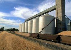 Минсельхоз планирует изменить тактику экспорта зерна