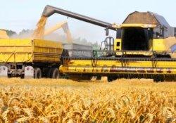 Производители зерна надеются на сохранение цен