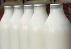 На поддержку молочной отрасли в Челябинской области направят почти 230 млн рублей