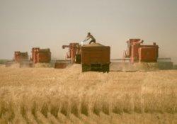 Глобальное потепление сделает Россию импортером зерна
