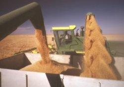 В марте может быть экспортировано около 250 тыс. т зерна