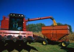 Минсельхоз утвердил цены на зерно для закупочных интервенций в 2013-14 г.