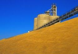 Высокие цены на зерно затормозили развитие зерноперерабатывающих отраслей