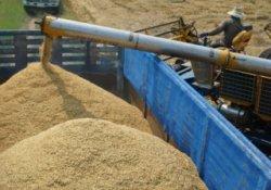 Зерна в России хватает