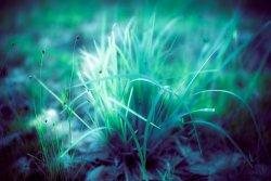 Плоды освещения: почему светящееся растение станет иконой «самодельной» биотехнологии будущего
