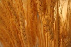 На Национальной товарной бирже пройдут очередные товарные зерновые интервенции