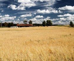 МСХ РФ представил план 5-ти летнего развития сельского хозяйства