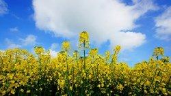 Производители растительного масла для биотопливной промышленности Германии впускают на свой рынок зарубежных производителей аналогичной продукции