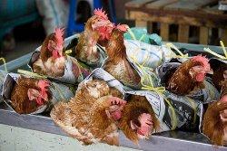 Обзор мирового сектора птицы: Птицеводческие компании замелькали в новостях