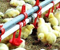 Возможности и проблемы птицеводческой индустрии в Дании
