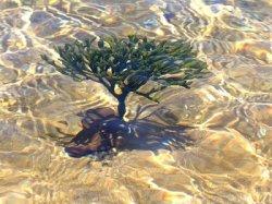 Cеминар , посвященный морским водорослям, привлек внимание 100 специалистов