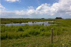 Более 16% посевов в ЕАО ушли под воду из-за паводка на Амуре