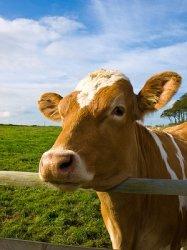 Архангельская область будет развивать молочное животноводство