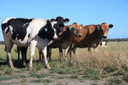 Россельхознадзор подтвердил подозрение в заболевании ящуром домашних животных в Забайкальском крае