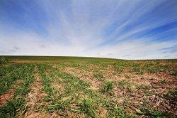 В Нижегородской области все чаще встречаются случаи умышленной порчи плодородной почвы