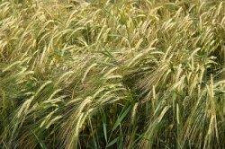 """Создание """"зернового пула"""" РФ, Украины и Казахстана даст странам преимущества на мировом рынке"""