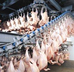 Увеличение производительности птицы через законодательство ЕС по станнингу