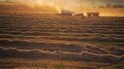 Сельхозпроизводство в РФ в сентябре снизилось на 1,4%, впервые за год