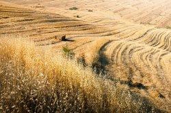 Россия присоединяется к коалиции для завоевания глобального зернового рынка