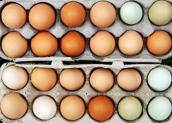 О ситуации на рынке яиц