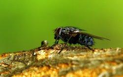 История мухи