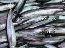 Минсельхоз утвердил общий допустимый улов водных биоресурсов на 2014 год
