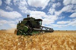 Минсельхоз: Россия может экспортировать 20 млн т зерна