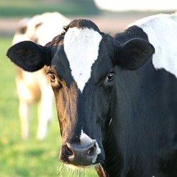 Молочный комплекс с выработкой биогаза будет создан в Казахстане