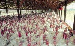 В Башкирии на полную мощность заработал крупнейший птицекомплекс