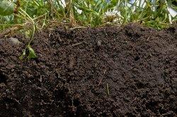 Чтобы накормить планету, необходимо улучшить состояние почв