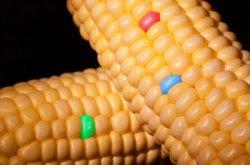 ГМО: догоним и перегоним Америку?