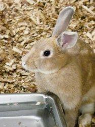 Россия наращивает производство и импорт мяса кроликов