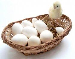 Жизнеспособные цыплята из правильно сохраненных яиц