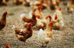 Продовольственная безопасность и потребительский спрос - сложности в реализации
