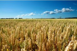 Россия становится серьезным игроком на мировом продовольственном рынке