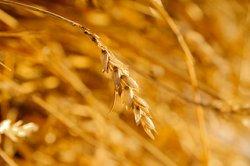 Рост цен на зерно в России замедлился