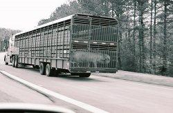 Новый способ борьбы с африканской чумой свиней?
