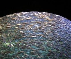 Россия присоединяется к конвенции об управлении биоресурсами в северной части Тихого океана