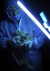 Светящиеся поросята - новый научный эксперемент
