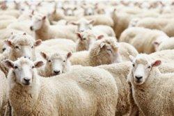 Племенное животноводство в России - огромный потенциал