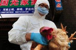 В Гонконге из-за вирусной угрозы уничтожат 20 тыс. кур