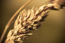 ЕБРР: мировой рынок зерна стал больше зависеть от поставок из РФ, Казахстана и Украины