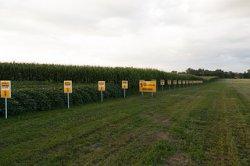 Российский зерновой союз призвал легализовать ГМО-посевы
