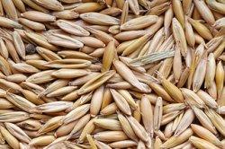 Минсельхоз подвел итоги зерновых интервенций