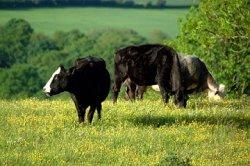 Изменение рациона питания скота поможет сократить выбросы парниковых газов