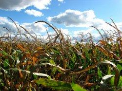 Российская академия наук: безопасность ГМО подтверждают тысячи исследований